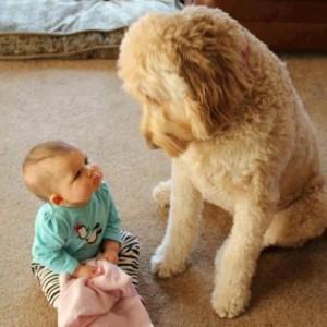 FBAR Baby looking up at big dog LR