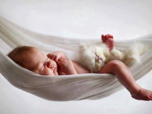 BFB Baby kitten hammock 2013