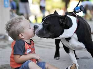 FBAR Pittie kissing toddler
