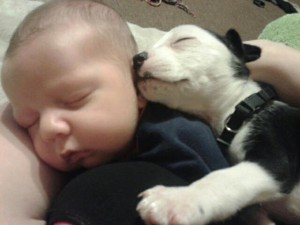 FBAR Pittie puppy asleep with baby 2013