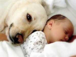 bfb animals baby dog sleeping