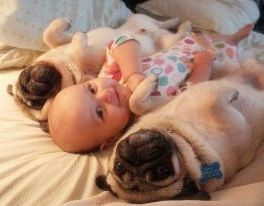 FB Smiling baby with dogs in bed