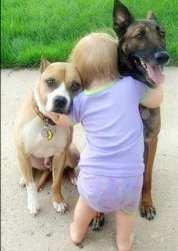 toddler hugging dogs