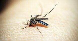 mosquito-1548947_1280